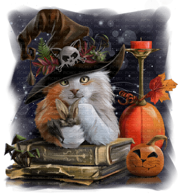 halloween witch cat sorcière  chat