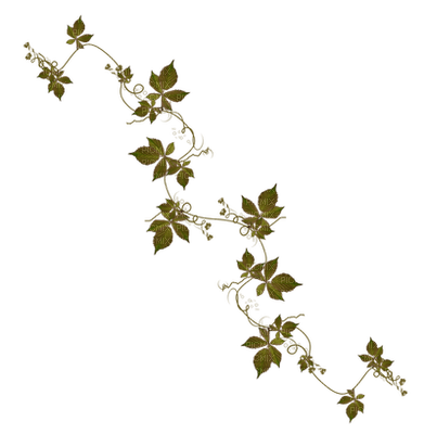 branch anastasia