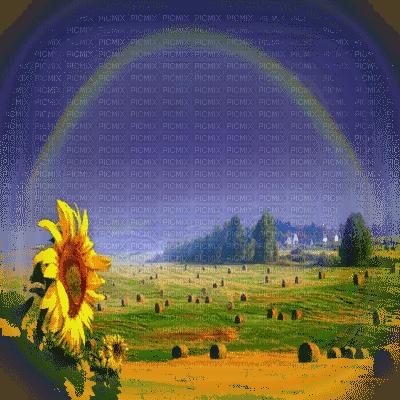 TOURNESOL paysage  sunflower landscape