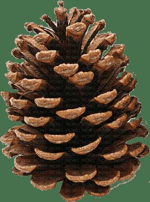 Pine cone.Victoriabea
