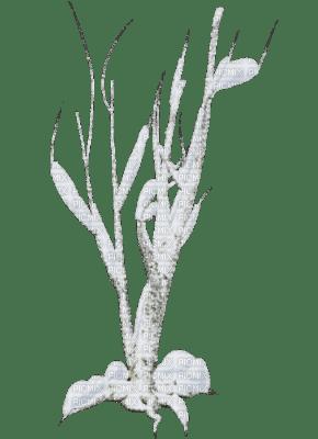 cecily-arbre hiver neige