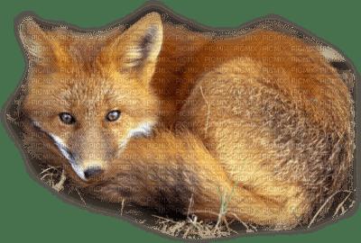 patymirabelle animaux renard