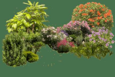 garden, sunshine3