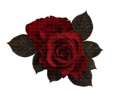 Red.Roses.Fleurs.Rose.Victoriabea