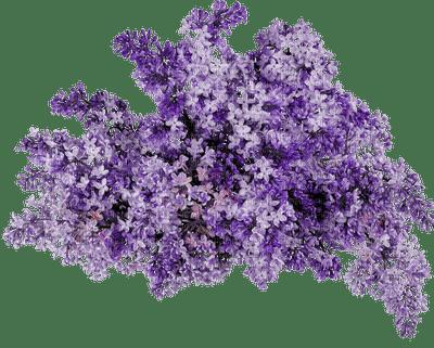 Kaz_Creations Deco Flowers Colours Bush Purple