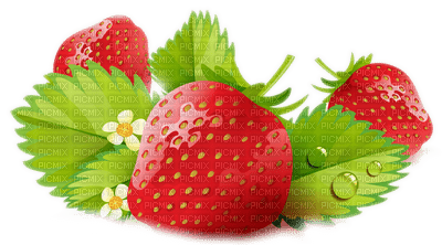 strawberry leaves  fraise feuilles