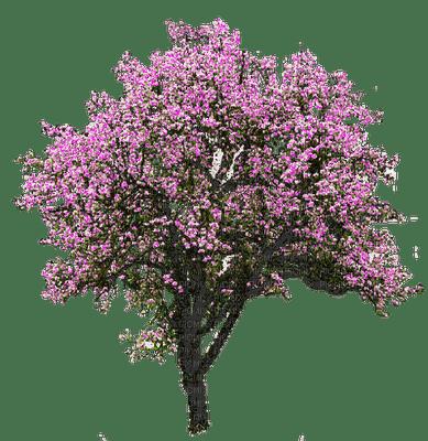arbre poirier