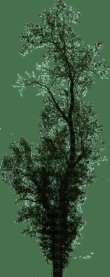 tree puu luonto nature