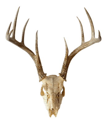 crâne.cerf.Deer.Skull.cowboy.western.Deco.Victoriabea