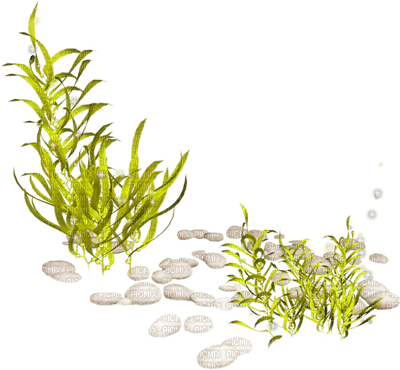 underwater plants seabed