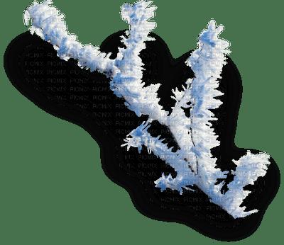 winter branche  hiver