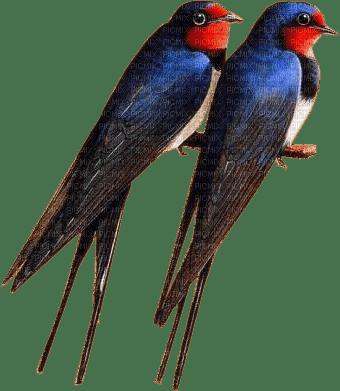 spring swallows birds_printemps hirondelles oiseaux