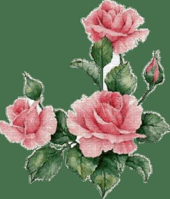 rose, roses.
