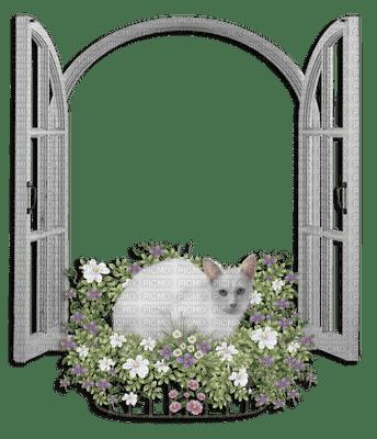 MMarcia cadre frame janela