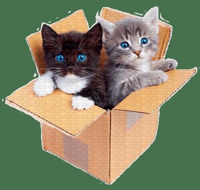 nous libertains chat entierement gratuit