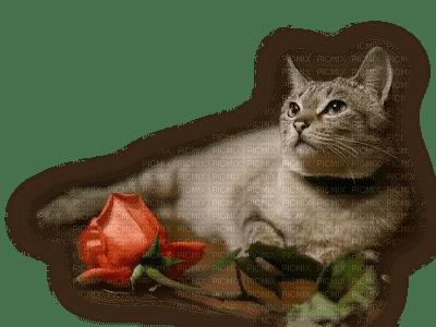 patymirabelle chat,fleurs