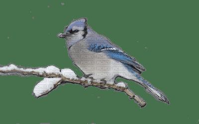птички живые гиф на прозрачном фоне для фотошопа сегодняшний день