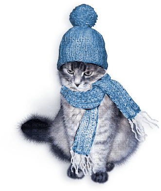 cat winter chat hiver