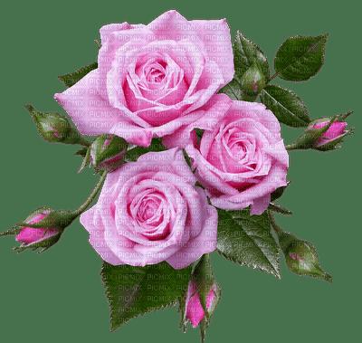 Flowers pink rose bp