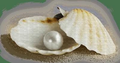 seashell deco shellfish pearl