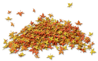 autumn_ leaves_automne_ feuille_BlueDREAM70