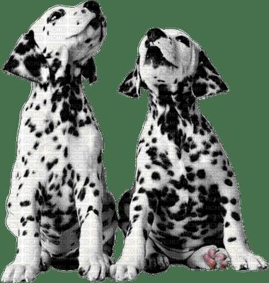 aze chien noir black blanc White