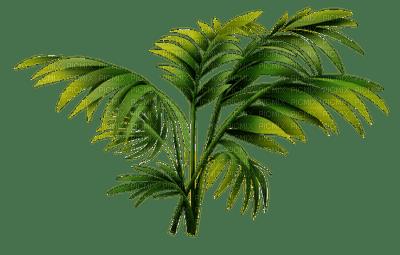 beach plage strand  summer ete  sommer  meer mer sea palm tree palme palm leaf  paume tube plant