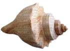 Kaz_Creations Deco Beach Sea Shell