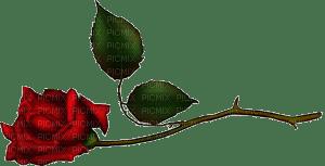 rose anastasia