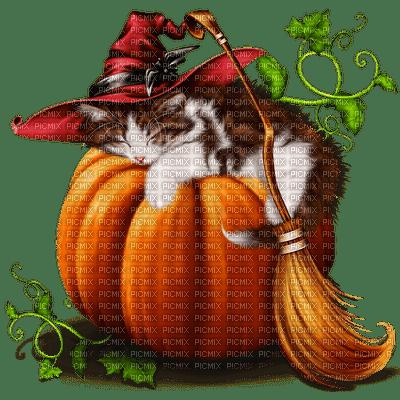 Halloween cat chat🐈🎃
