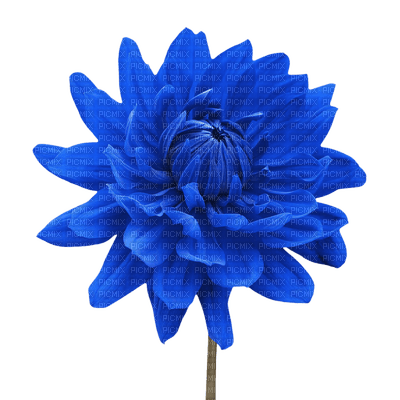 Kaz_Creations Deco Flower Flowers Blue