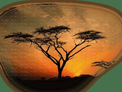 paysage-sun-tree