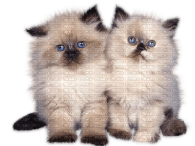 Tube Animaux Chat