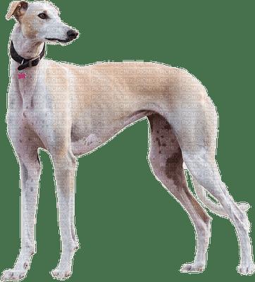 chien Pelageya
