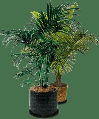 Plants.palm.pot.deco.Victoriabea