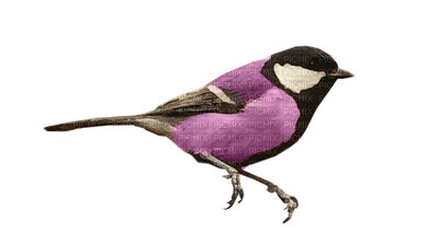 Kaz_Creations Purple Violet Deco Birds Bird