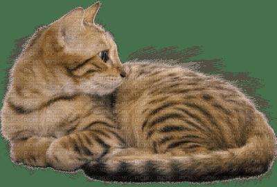 new cat hasn't used litter box