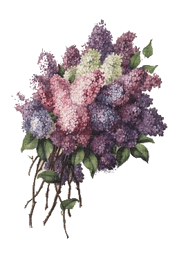 flowers-lilacs-syrener