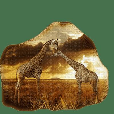 Giraffe bp