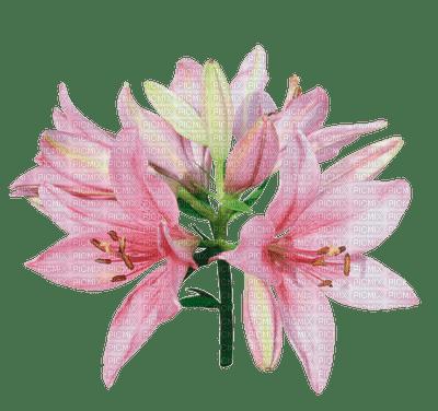 fleur-flower_fleurs-tube-lis-lily-decoration-pink-rose-image_Blue DREAM 70