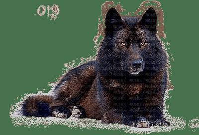 Wolf.Loup.Lobo.Victoriabea