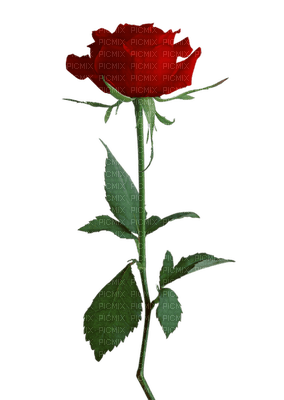 Fleur.Flower.Red.Rose.Deco.Victoriabea