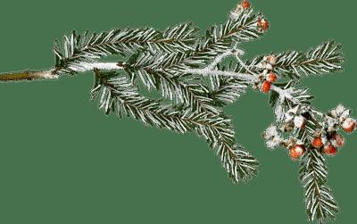 chantalmi  noël    branche hiver winter neige snow