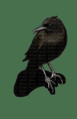crow raven  corbeau