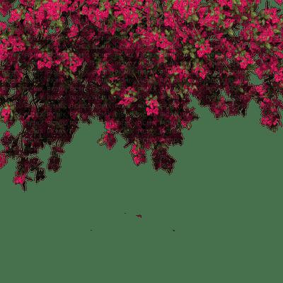 branch katrin
