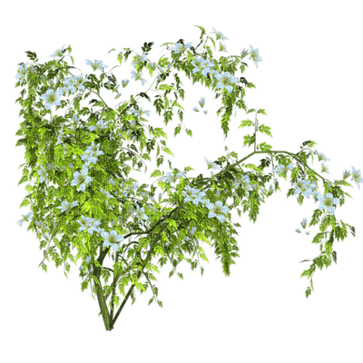 Plants.Fleur.Branche.Branch.Rama.flowers.Victoriabea