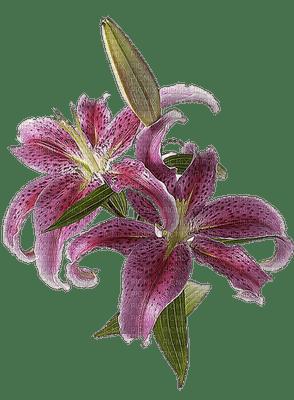 patymirabelle fleurs orchidée