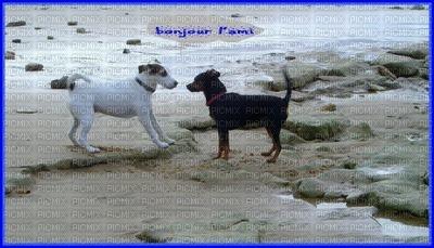 les amis chiens
