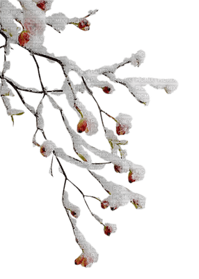 Kaz_Creations Winter Branch