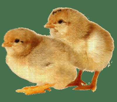 Kaz_Creations Chicks